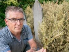Alleen rigoureuze oplossing kan buxusmot op Almelose begraafplaats stoppen