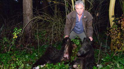 Café-uitbater vindt twee huiden en kop van wilde everzwijnen