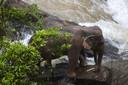 Een van de geredde olifanten.