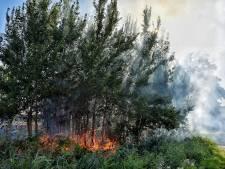 Bermbrandjes door treinen lastig te voorkomen: 'Stoomlocs rijden nou eenmaal op kolen, water en vuur'