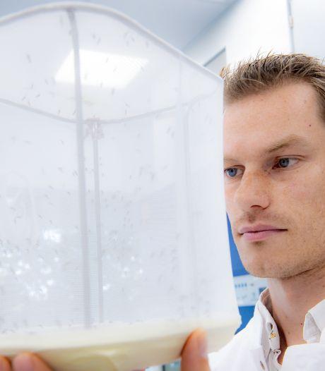 Miljoenen van Gates Foundation voor Nijmeegs onderzoek naar muggen
