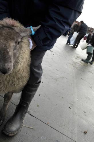 Oeps... Basisschool boekt last minute nog uitstap: kinderen gaan voor Werelddierendag op bezoek bij... 'Offerfeest Werchter'