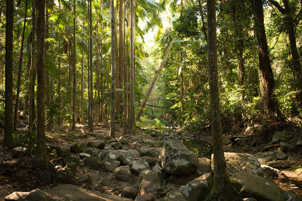 Droge rivierbedding in Buderim Forest Park, Queensland, Australië.