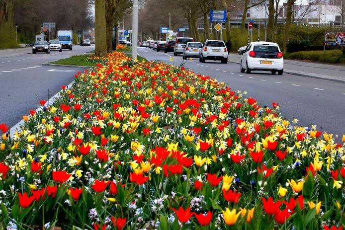 Fleurige bloemetjes in de berm van de Banneweg in Gorinchem.
