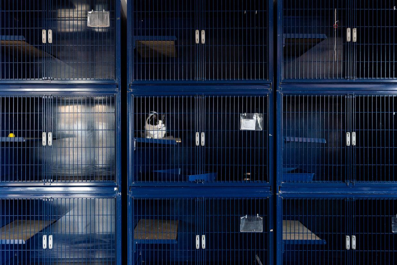 In het KMDA Dierenasiel Antwerpen is er plaats voor vijftig tot zeventig katten. Er zijn er nu negen die nog geen baasje gevonden hebben.
