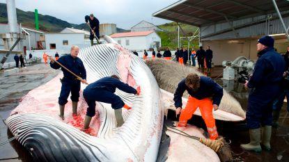 IJsland gaat weer op walvissen jagen