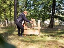 Uitbreiding vakantiepark Beekbergen afgerond, mét speciale speeltuin voor honden