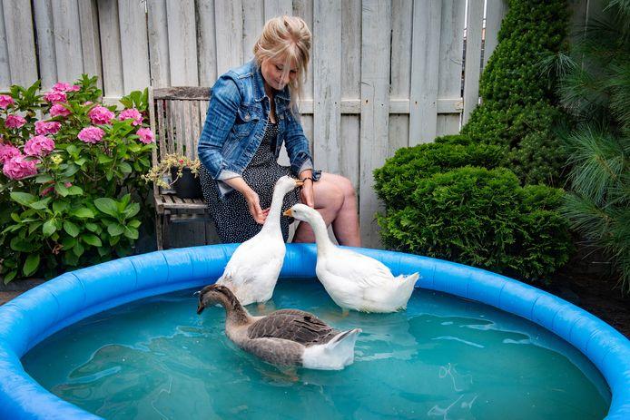 Het zwembadje - waar Guus, Teun en Jip veel vertier hebben gehad - staat zelfs nu haar ganzen verhuisd zijn in de achtertuin van ganzenmoeder Yvonne van Dreumel. Ze is er nog niet aan toe gekomen om de spullen van de ganzen op te ruimen, omdat het dan voor haar écht lijkt alsof ze nooit bestaan hebben.