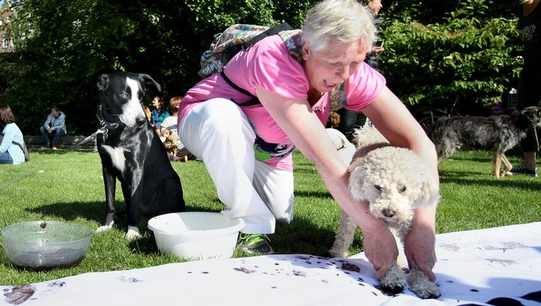 In het Vondelpark in Amsterdam demonstreerden gisteren tientallen hondenbezitters onder andere tegen het doorfokken van hondenrassen. De honden signeerden het protestdoek met hun pootjes. Beeld Jean-Pierre Jans