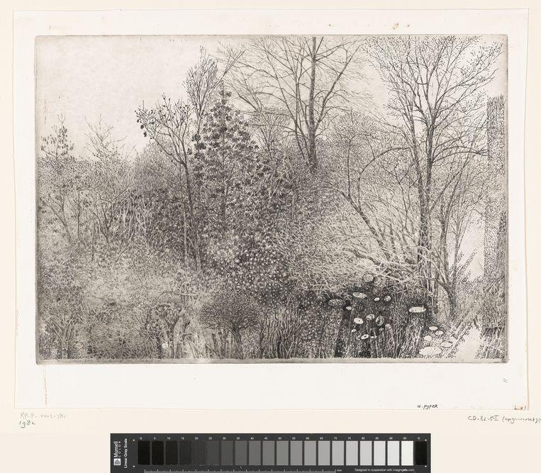 Bomen en struiken Rhijnauwen, 1982.  Beeld Charles Donker