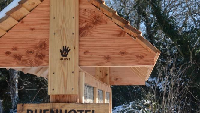 Lint mag zich met trots 'bijenvriendelijke' gemeente noemen dankzij inzet groendienst