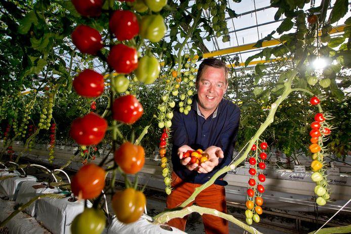 """Jos van Mil is de """"uitvinder"""" van de Tommies tomaten; de kleine snoeptomaatjes. Foto ter illustratie."""