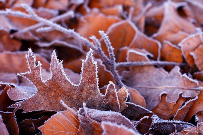 Op weerstation Woensdrecht daalde de temperatuur dinsdagochtend naar 0,1 graden onder nul.