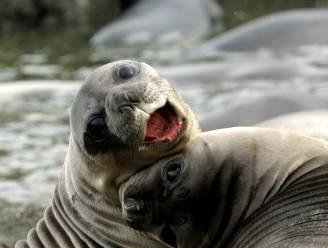 Zeker 65 diersoorten kunnen lachen: wat is de functie daarvan?