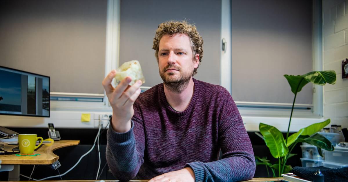 """Belgisch onderzoek bewijst hoe dinosaurussen uitstierven: """"Een mirakel. We hebben enorm veel geluk gehad"""" - Het Laatste Nieuws"""
