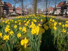 Het is lente in Klein Rome; de Romeinen noemden deze voorjaarsbloemen overigens Amaryllidaceae