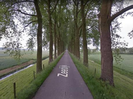200 bomen op de Zeedijk in Dordrecht onder de loep genomen