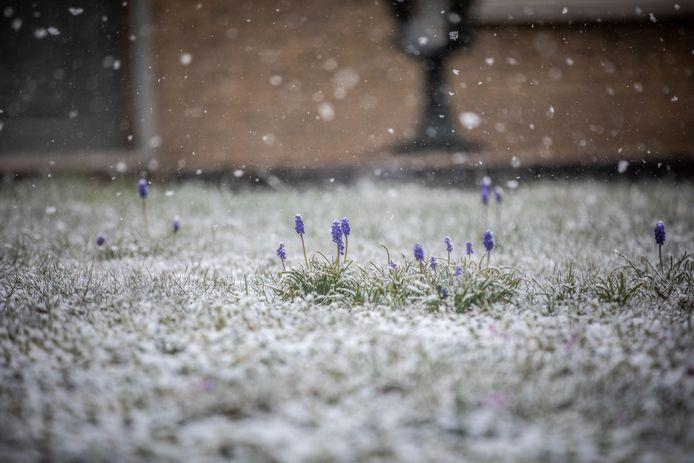 Lavendel, omringd door dikke sneeuwvlokken in de lucht.