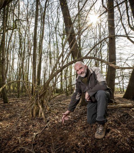 Meer reeën en hazen in Noordoost-Twente: 'Ze passen zich gemakkelijk aan hun omgeving aan'