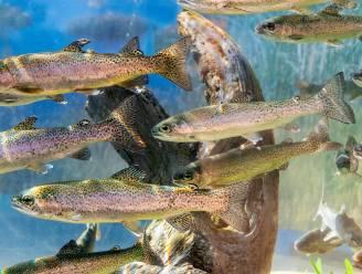 Een derde van zoetwatervissen met uitsterven bedreigd