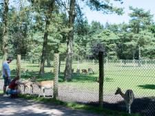 Vijf ideeën om toeristische trekpleister te maken van het Hertenkamp in Epe