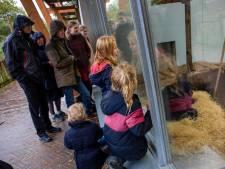 Waanzinnige herfstvakantie voor toeristische attracties: 'Gezin uit Gent reed op en neer naar Ede, om twee uurtjes te springen'