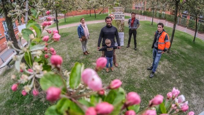 """Kortrijk zet in op bloemenweides en vraagt inwoners mee te doen: """"Maai tot eind mei het gras niet"""""""