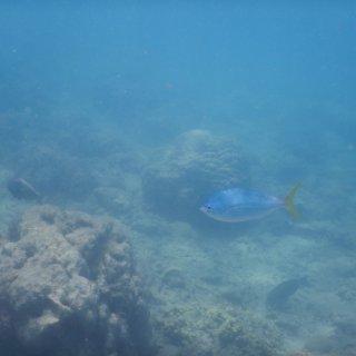 wetenschappers-bezorgd-op-klimaattop--%E2%80%98zuurstof-in-zee-neemt-af%E2%80%99