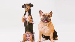 Waarom modemerken massaal inzetten op honden