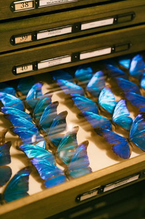 Foto van Versteende bliksems en walvispenissen: Instituut voor Natuurwetenschappen toont zijn verborgen parels