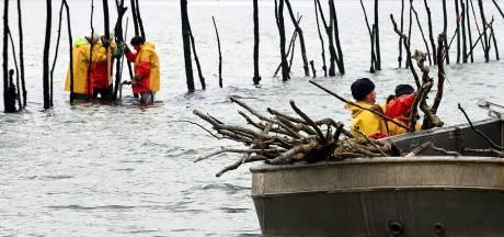 Strijd tegen de wormen en de winter: jaarlijkse vervanging staken in weren Oosterschelde