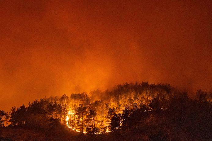 Een bosbrand in de regio Milas.
