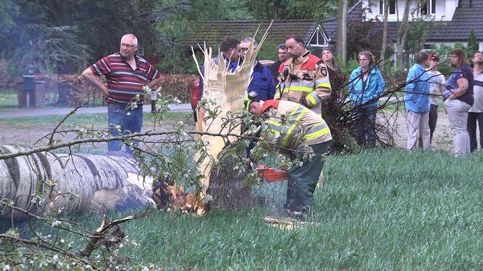 Een omgewaaide boom bij Staphorst.