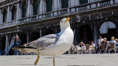 Meeuw pikt frietje mee, woedende man slaat vogel dood