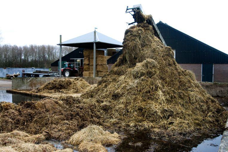 Nederlandse veehouders mogen meer mest uitrijden dan de Europese norm door de hoge opbrengsten van Nederlandse weilanden. Beeld ANP XTRA