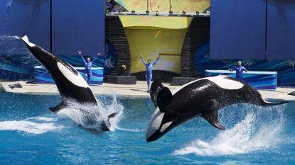 Opnieuw dode orka in SeaWorld