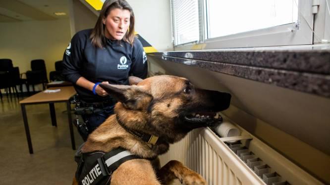 """Politiehonden in Damme/Knokke-Heist krijgen eigen aangepaste dienstwagens: """"Ze zijn een vaste waarde geworden in het straatbeeld"""""""