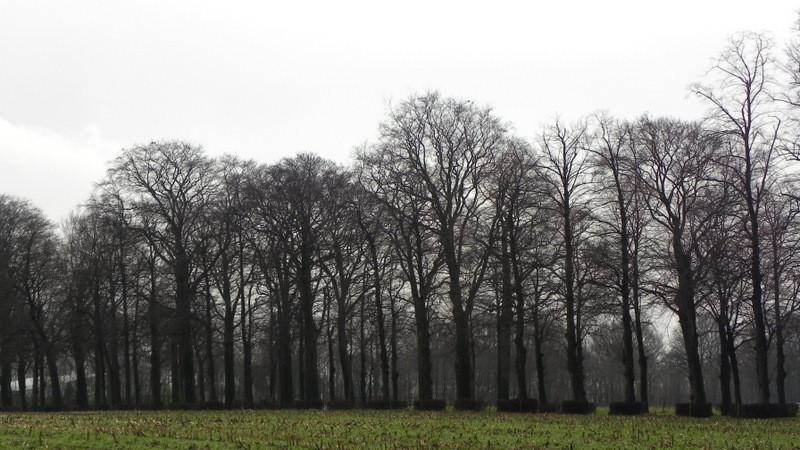 De Kasteellaan, de hoofdingang van de Poort van Heusden, van opzij gezien.