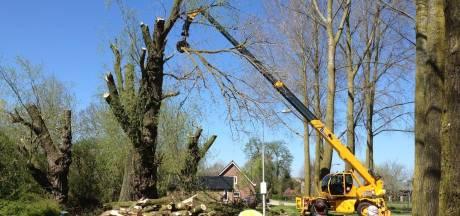 Massale kap in Beuningen: 541 bomen gaan om