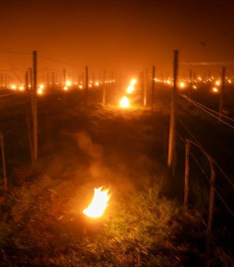 Les images féeriques de la lutte contre le gel dans un vignoble hennuyer
