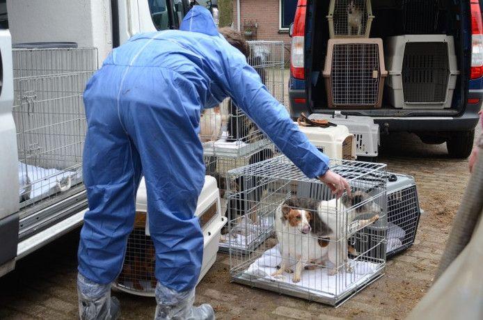 De Dierenbescherming haalt verwaarloosde honden op bij de fokker in Lettele.