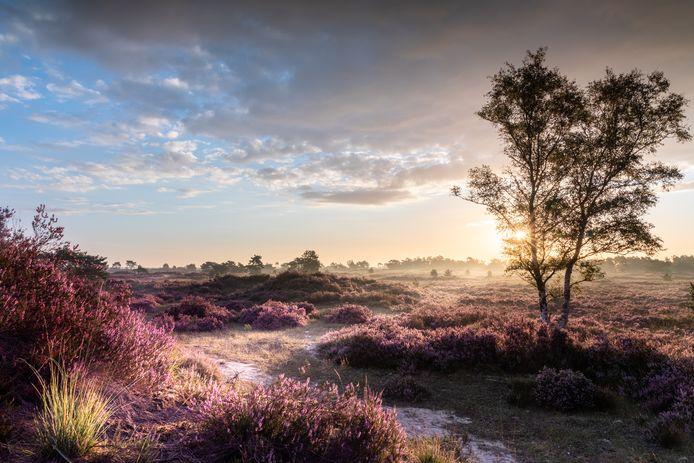 Een beeld van de Kalmthoutse Heide.