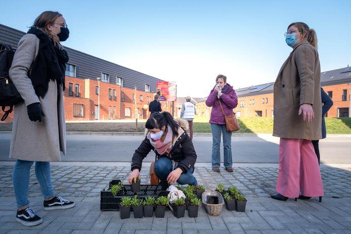 Op het Alinda Peetersplein werden bloemen geplant voor Vrouwendag.