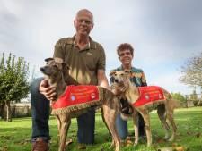Twee Heijningse windhonden uit hetzelfde gezin winnen goud bij EK: 'Niet te bevatten'