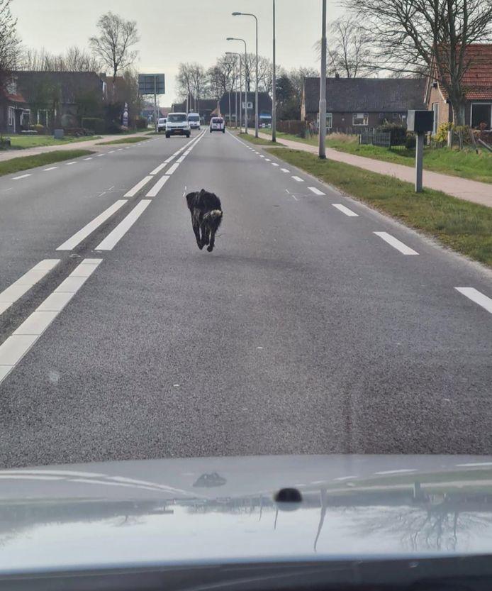 Een foto van een loslopende hond bij Witte Paarden leidde ertoe dat de zoekactie zich nu op Steenwijk en omgeving richt.
