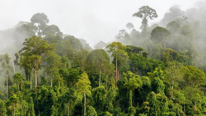 El Niño deed bossen 3 miljard ton CO2 uitstoten