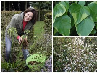 Wil je ook in de winter leven in je tuin? Deze planten houden het hele jaar groene bladeren