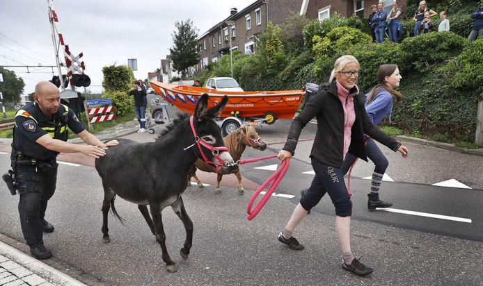 Bewoners in het Nederlands Limburgse Meerssen verlaten het gebied nadat een dijk langs het Julianakanaal is doorgebroken. Een pony en een ezel worden in veiligheid gebracht.