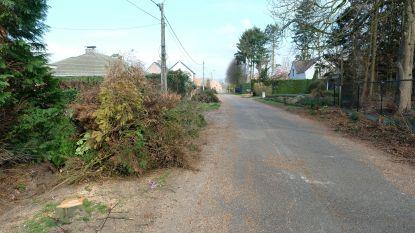 """Sint-Martinuswijk kaalgekapt voor rioleringswerken: """"Mijn kindjes weenden toen ze al die bomen zagen liggen"""""""