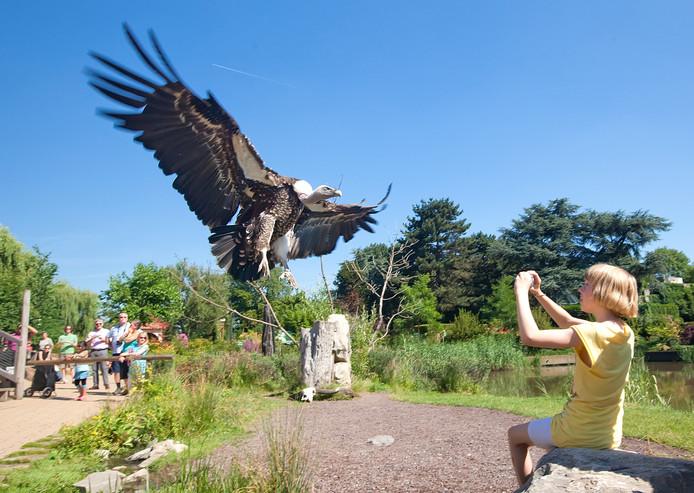 Vogelshow in Avifauna.